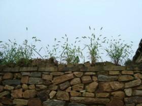 交易就是墙头草,见风使舵两头倒